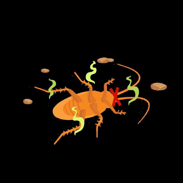 new-design-doctor-cockroach-herbal-bait-product--effective-tkkinternational-copyright-2021-บริการกำจัด-แมลงสาบ-สมุนไพร