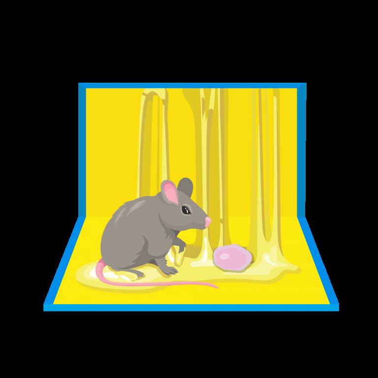 rat-away-glue-trap-effective-product-tkkinternational-copyright-2021-บริการไล่-กำจัด-หนู-สมุนไพร