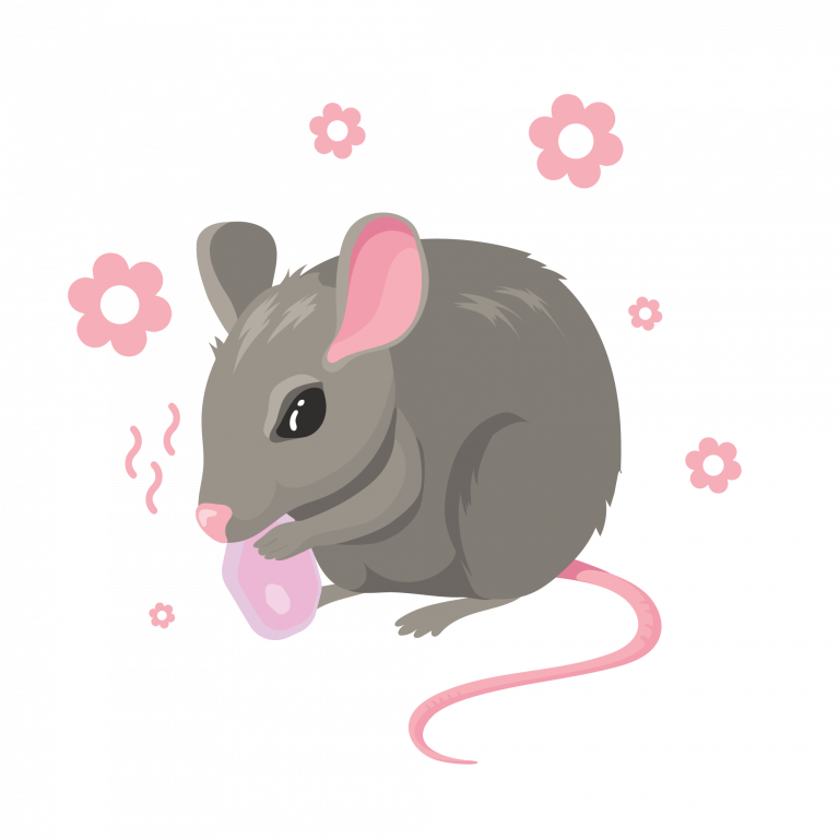 rat-away-herbal-bait-effective-tkkinternational-copyright-2021-บริการไล่-กำจัด-หนู-สมุนไพร