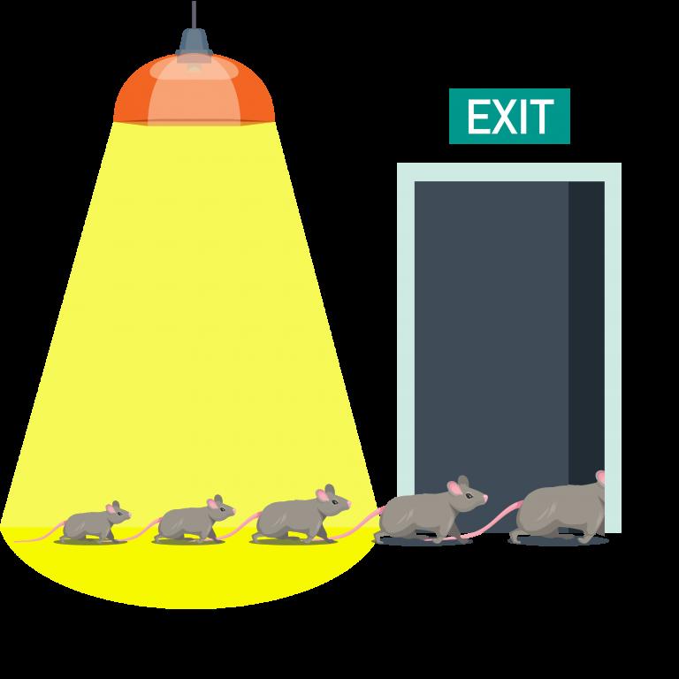 rat-away-herbal-product-effective-repel-tkkinternational-copyright-2021-บริการไล่-กำจัด-หนู-สมุนไพร